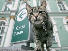 хорошие новости - мартовский кот