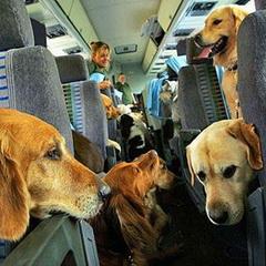 хорошие новости - авиакомпания для животных