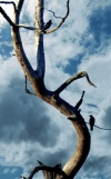 хорошие новости - птица на дереве